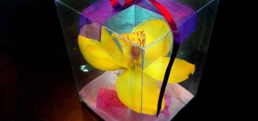 cutii plastic flori