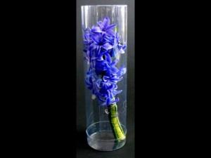 Ambalaje pentru flori