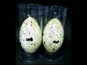 Ambalaje cilindrice pentru lumanare cutii cilindrice lumanare forma de ou Cutii cilindrice lumanare forma de ou ambalaje plastic lumanare in forma ou 517 1