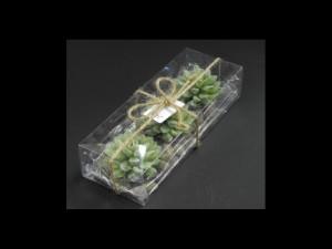 Cutii pentru lumanare in forma de cactus
