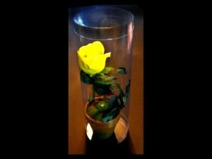 Cilindri pentru flori cilindri trandafir ghiveci Cilindri trandafir ghiveci cutii plastic cilindrice trandafir in ghiveci 413 3