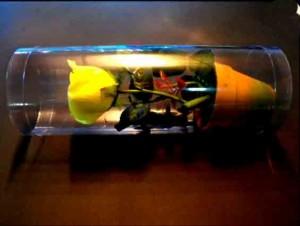Cilindri pentru ghiveci cilindri trandafir ghiveci Cilindri trandafir ghiveci cutii plastic cilindrice trandafir in ghiveci 413 4