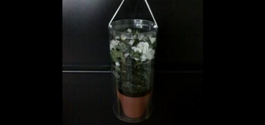 cutii cilindrice ghiveci cutii cilindrice ghiveci Cutii cilindrice ghiveci ambalaj din plastic pentru ghivece cu diverse flori 458 1 520x245
