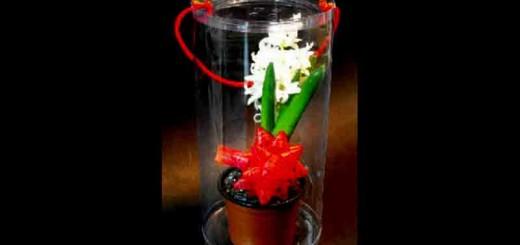 ambalaje flori ghiveci ambalaje flori ghiveci Ambalaje flori ghiveci cutii plastic rotunde ghiveci zambila 419 1 2 520x245